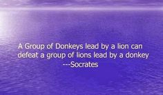 A group of Donkeys lead by a lion can  defeat a group of lions lead by a donkey ~Socrates #quotes