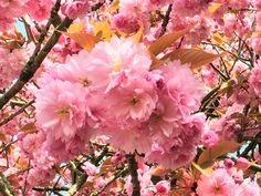 Have a nice day!  Beautiful Blossom    #flowers #fbeautiful #flower #photography
