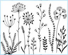 Wildflowers Clipart and Stamps. Clipart wild flowers and stamps. Flower Clipart Images, Image Clipart, Art Clipart, Flower Images, Art Floral, Flower Graphic, Graphic Art, Botanical Line Drawing, Botanical Drawings