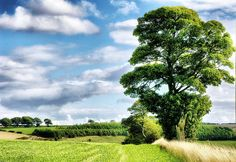 The Beauty of Trees. Thixendale,Yorkshire Wolds. UK. by Philip Ed, via Flickr