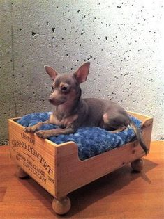 Luxury Wine Crate Pet Beds for Dogs & Cats by RagsIIRiches