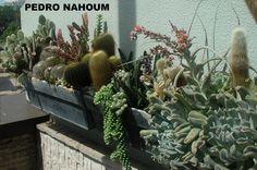 Blue Man Showroom, Barra da Tijuca, Rio BOTANICA POP 2005
