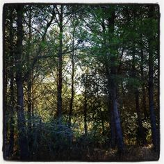 Pequena floresta cerca de Alaior #menorca #menorcamediterranea