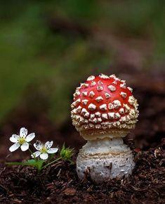 Украшения из настоящих растений byVostrova