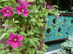pink clematis and turquoise porch by rosanne maccormick-keen, via Flickr