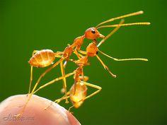 Romancing Ants