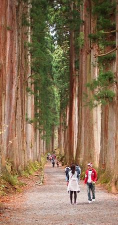 The old road with Japanese cedar trees leading to Hagakushi Shrine in Nagano, Japan • photo: My * Life on Women Excite