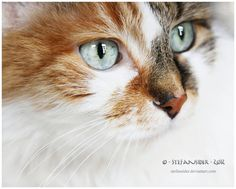 what cats think about? by ~Stefansider