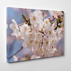 Canvasprints.io | White Cherry Blossom - #canvasprintsio - Low cost, high quality canvas prints made in London UK from just £13.99. You're sure to find inspiration in our collection. Ask about our photo to canvas option too, it's super simple. Canvas prints on wall / flower and floral canvas art