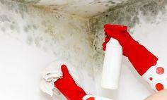 4 remedios caseros para quitar el moho de las paredes - Hogar Total