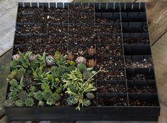 Planting vertical panels