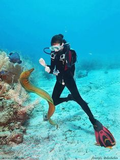 Beautiful Underwater Photo in Dubai with a Moray Eel | We also find them all around Dominican Republic, especially in the Caribbean Sea around Saona Island and Catalina Island, Dominican Republic | www.seaprodivers.com | Toll Free 1-888-252-3806