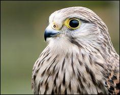 Birds of Gauntlet 010 | Flickr - Photo Sharing!