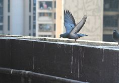Ventilation System, Pest Control, Pigeon, Buildings, Vehicles, Health, Blog, Life, Health Care