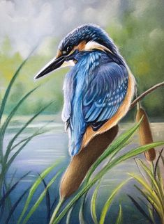 Realistic Animal Drawings, Pencil Drawings Of Animals, Bird Drawings, Oil Pastel Drawings, Art Drawings Sketches Simple, Drawing Ideas, Colored Pencil Artwork, Color Pencil Art, Pastel Pencils