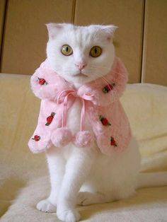 kittens in costumes | Cat Costumes