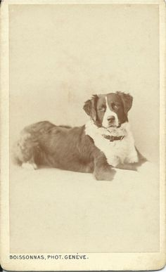 c.1870s St. Bernard cdv. Photo by Boissonnas Phot., Geneve. From bendale collection