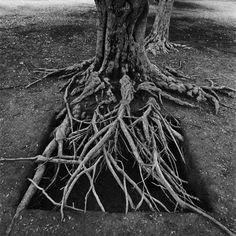 Lustre racines d 39 arbre en fils d 39 tain d 39 apr s l 39 auteur ce lustre racines d 39 arbre est inspir d - Arbre sans racine envahissante ...