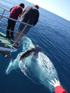 Whale-watching in Hervey Bay, Queensland, Australia.