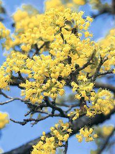 Fresh Die sch nsten Pflanzen f r Bienen und Hummeln im Garten auf Balkon garden Pinterest Bees Gardens and Herbs garden