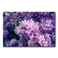 So Crazy Art - Canvas Print Wall Art Painting For Home Decor,Purple Lilac Paintings Modern Giclee Stretched And Framed Artwork Oil The Picture For Living Room Decoration,Flower Pictures Photo Prints On Canvas  Consider using purple wall art if you want to make any room in your home look unique, trendy and modern.  In fact you can get all kinds of purple home décor ideas by finding a few pieces of charming and cool purple decorative accents.  Combine these with purple metal wall art to create…