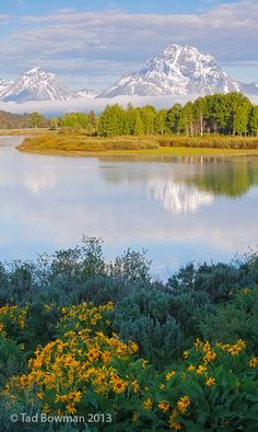 Oxbow Morning  Grand Tetons, Wyoming
