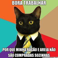 Seu bichinho tem uma mensagem para você haha #BomDia #Gato