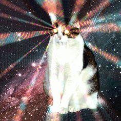 Hypno cat attacks! Animated GIF.