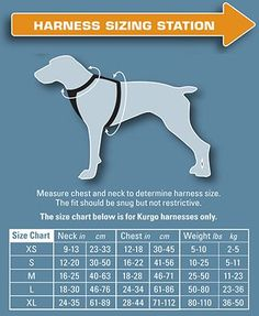 There are many benefits to owning a harness for your dog. Finding the right size is key.