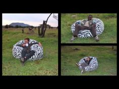 The zebra print bean bag chair was recently added to the product line at Comfy Sacks. The product was brought back to its native habitat to see if it would b.