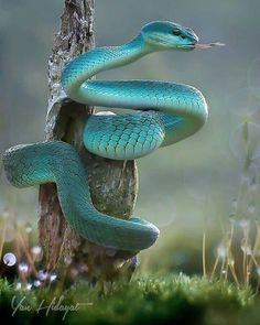 Awesome Viper by . Awesome Viper by . Awesome Viper by . Les Reptiles, Cute Reptiles, Reptiles And Amphibians, Reptiles Preschool, Pretty Snakes, Beautiful Snakes, Animals Beautiful, Animal Photography, Wildlife Photography