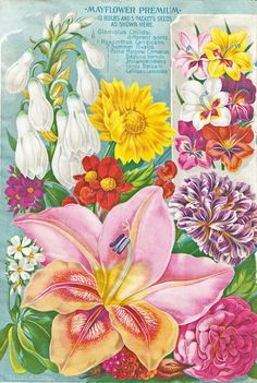 Gorgeous, bright garden flowers pop from the page of this 1893 Mayflower seed catalog insert, and the reverse of the page shows beautiful damage from age - the red and pink colors are peeking through to the newsprint. Art Vintage, Vintage Cards, Vintage Clip, Vintage Prints, May Flowers, Flowers Nature, Beautiful Flowers, Flower Images, Flower Art