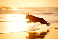 15 Reasons Why You Should Stay Away From German Shepherds German Shepherd Puppies, German Shepherds, Schaefer, Belgian Malinois, Dog Runs, Working Dogs, Animal Photography, Amazing Photography, I Love Dogs