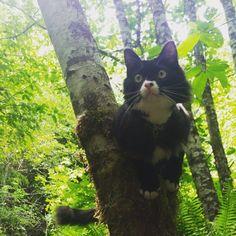 Paddy, le chat qui aime le kayak et la randonnée