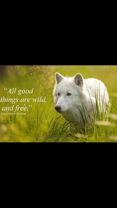 Wolf Quote》Freedom