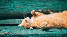 Nicht nur die Menschen leiden unter der starken Hitze, sondern auch die Katzen! Wir haben ein paar Tipps für euch, damit euer Kätzchen die heißen Tage unbeschadet übersteht.