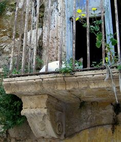 Sicilian cat on a balcony in Siracusa