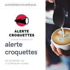 Les Croquettes, Facebook Marketing, Affirmations, Twitter, Tableware, Dogs, Food, Dinnerware, Tablewares
