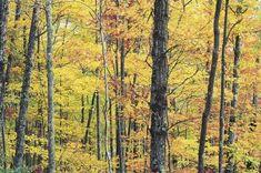 Short Hiking Trails to Waterfalls in Gatlinburg, Tennessee