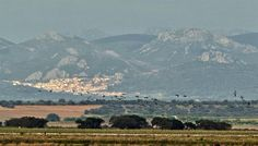 @CoyoteEstepario Welcome To The Cranes Festival. Extremadura, Spain 29.Nov.2014 Several thousands of cranes in the rice fields #birding140