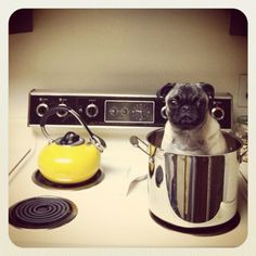 Something is wrong here #pug