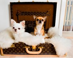 How cute are these puppies... and how spoilt in their sheepskin-lined Louis Vuitton suitcase bed.  Image from KML Design.