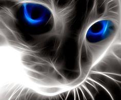 catface-wallpaper-10041621.jpg (960×800)
