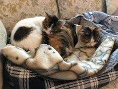Guest Star Cat: Mimi and Oscar The below story was submitted by Marcia B. Mimi was found in the middle of an isolated highway on a bitterly cold night. A friend of ours went around her thinking she was dead, then backed up because she was not 'flat' enough. Lucky for us she backed her one-ton pickup and trailer back the […] #Cat, #Cats, #Cute, #Funny, #Katze, #Katzen, #Katzenworld, #Kawaii, #Pets, #ねこ, #猫 #GuestCats