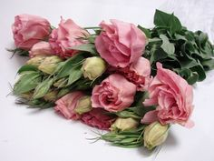 Flower Availability @ Bunches for Africa Western Cape (Pty) Ltd Buy Flowers Online, Wedding Consultant, Cut Flowers, Cape, Floral Wreath, Africa, Wedding Ideas, Fresh, Pink