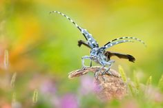 Photograph I wanted to fly by FuYi Chen on 500px