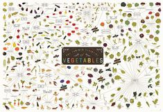 Pop Chart Lab — The Various Varieties of Vegetables || So detailed! I love their illustrations!
