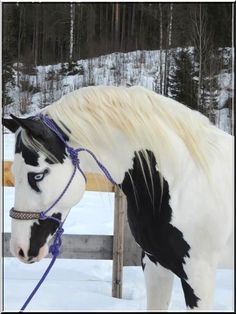 Horse white and black