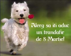 8 Martie, Youtube, Desktop Wallpapers, Weddings, Facebook, Lady, Flowers, Food, Bonito