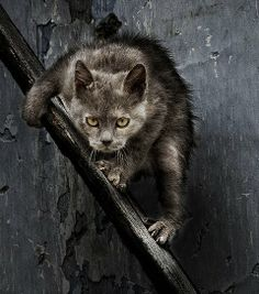 Check out this scary cat. I know nothing about why it's like this – it's just a great photo! Pretty scary though!